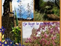 Primavera en San Esteban